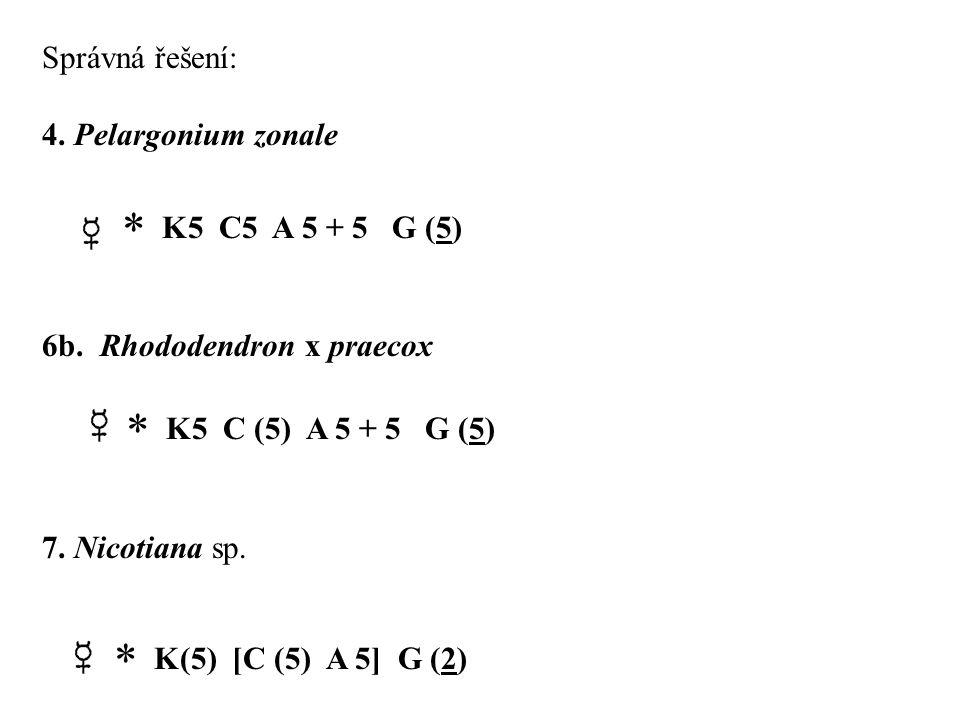  K5 C (5) A 5 + 5 G (5)  K(5) [C (5) A 5] G (2) Správná řešení: